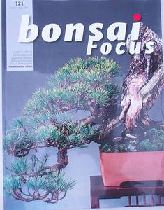 Bonsai-Fokus - Niederländisch Nr.121