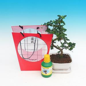 Raumbonsais in einer Geschenktüte