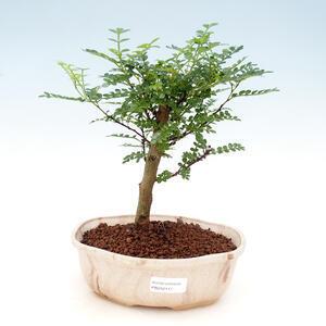 Bonsai miska 32 x 24,5 x 7,5 cm, barva šedobéžová