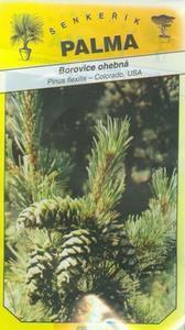 Flexible Pine - Biegsame Kiefer