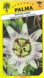 Leidenschaft Coelinblau -Passiflora