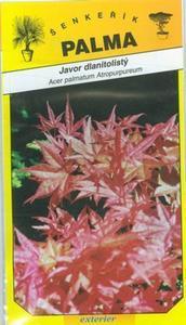 Fächerahorn - Acer palmatum Atropurpureum