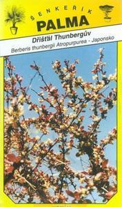 Berberis thunbergii - Berberis thunbergii Am.