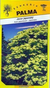 Fächerahorn - Acer japonicum