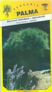 Pine seidig östliche weiße Kiefer - Pinus strobus