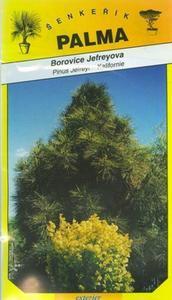 Jefreyova Kiefer - Pinus Jefreyi