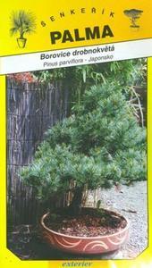 Mädchen-Kiefer - Pinus parviflora