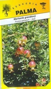 Granatapfel Granatapfel - Punica granatum