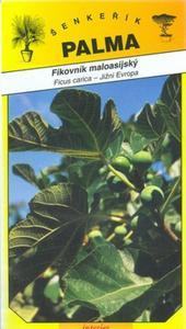 Anatolian Feigenbaum - Ficus carica
