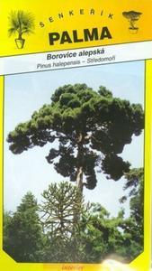 Alepská Kiefer - Pinus halepensis