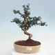 Bonsai-Schale 42 x 33 x 8 cm, graublaue Farbe - 1/5
