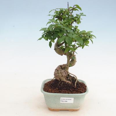 Keramische Bonsai-Schale 23 x 20 x 7 cm, Farbe grau - 1