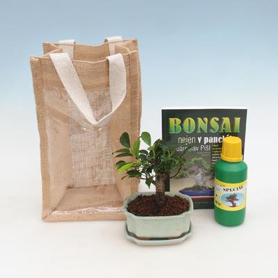 Zimmer Bonsai in einer Geschenktüte - JUTA, Ficus-Ficus retusa