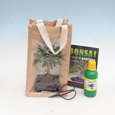 Zimmer Bonsai in einer Geschenktüte - JUTA - 1