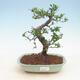 Keramische Bonsai-Schale 23,5 x 23,5 x 7 cm, beige Farbe - 1/3