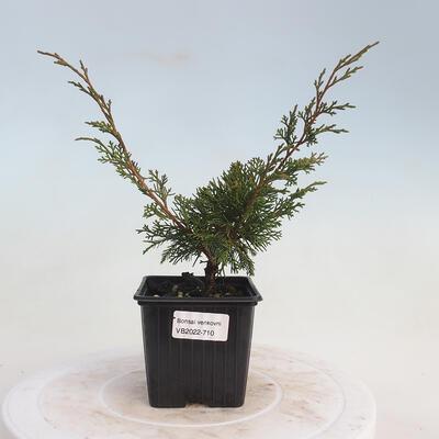Bonsai-Schale 42 x 23 x 8,5 cm, grau-beige Farbe - 1