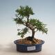 Bonsai-Schale 38 x 30 x 8 cm, graublaue Farbe - 1/5