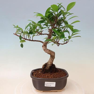 Bonsaischale aus Keramik 19 x 19 x 6,5 cm, Farbe Rissrot - 1