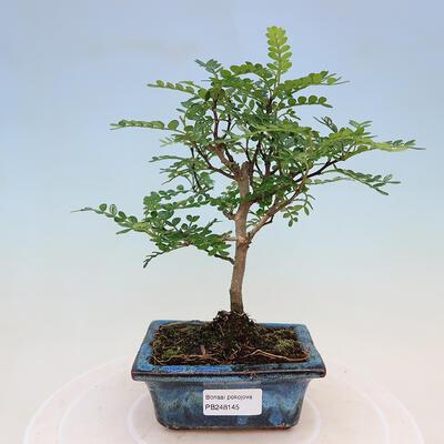 Bonsaischale aus Keramik 17 x 17 x 7,5 cm, Farbe grau-grün - 1
