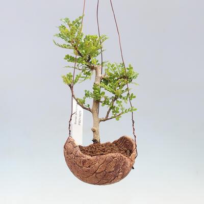 Bonsai-Schale 30 x 23 x 8,5 cm, grau-beige Farbe - 1