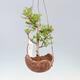 Bonsai-Schale 30 x 23 x 8,5 cm, grau-beige Farbe - 1/5