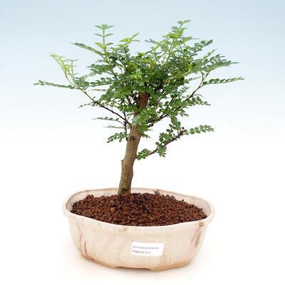 Bonsai-Schale 32 x 24,5 x 7,5 cm, grau-beige Farbe - 1