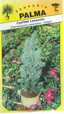 Lawsons Scheinzypresse - Chamacyparis lawsoniana