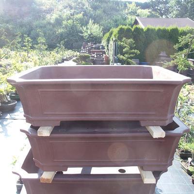 Bonsai-Schale 80 x 62 x 22 cm - 1