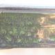 Keramische Bonsai-Schale 20,5 x 15 x 7 cm, Farbe grün - 2/3