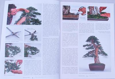 Bonsai und Japanischer Garten Nr.48 - 2