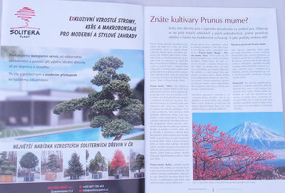 Bonsai und Japanischer Garten Nr.49 - 2