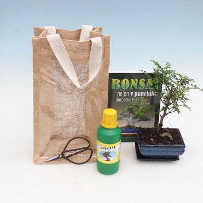 Zimmer Bonsai in einer Geschenktüte - JUTA - 2