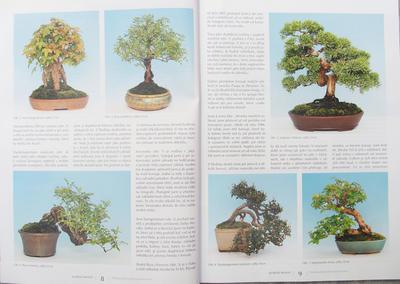 Bonsai und Japanischer Garten Nr.51 - 2