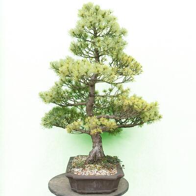 Bonsai-Schale 30 x 23 x 8,5 cm, grau-beige Farbe - 2