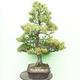 Bonsai-Schale 30 x 23 x 8,5 cm, grau-beige Farbe - 2/5