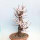 Bonsai-Schale 29 x 23 x 8,5 cm, grau-beige Farbe - 2/5