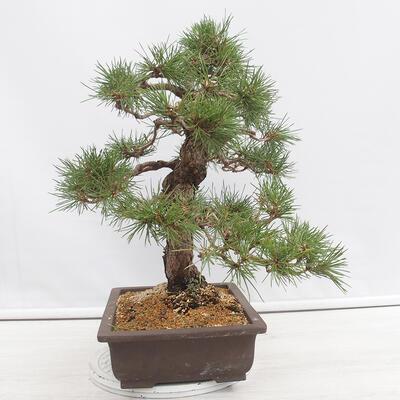 Bonsai-Schale 31 x 24 x 10 cm, Farbe beige-grau - 2