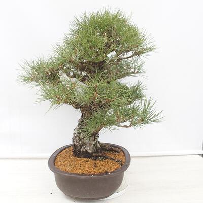 Bonsai-Schale 22,5 x 17 x 7 cm, grau-beige Farbe - 2