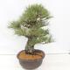 Bonsai-Schale 22,5 x 17 x 7 cm, grau-beige Farbe - 2/5