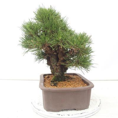 Keramische Bonsai-Schale 10,5 x 9 x 4,5 cm, Farbe braun-grün - 2