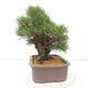 Keramische Bonsai-Schale 10,5 x 9 x 4,5 cm, Farbe braun-grün - 2/3