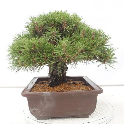 Keramische Bonsai-Schale 12 x 11 x 3 cm, Farbe blau - 2