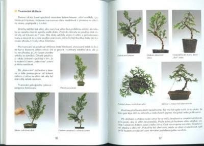 Das Buch nicht nur Bonsai in einem Wohnblock - 2