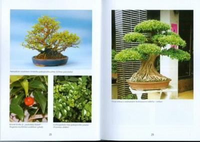 Bonsai-Bäumen und Gärten, nicht nur in Japan - 2