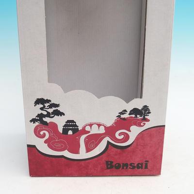 Geschenkbox - Papier - 2