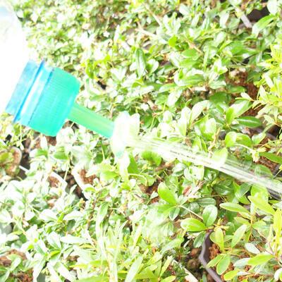 Bonsai-Sprinkler für PET-Flasche 5 Stück - 2