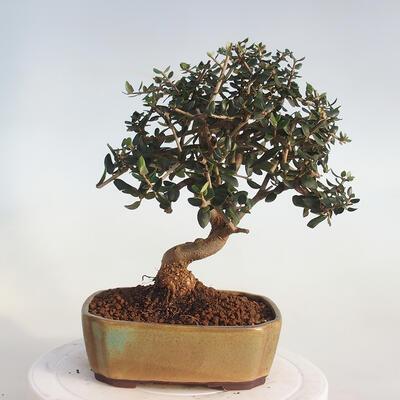 Bonsai-Schale 37 x 26 x 11 cm, grau-beige Farbe - 3