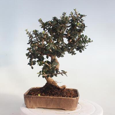 Bonsai-Schale 42 x 23 x 8,5 cm, grau-beige Farbe - 3