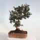 Bonsai-Schale 42 x 23 x 8,5 cm, grau-beige Farbe - 3/5