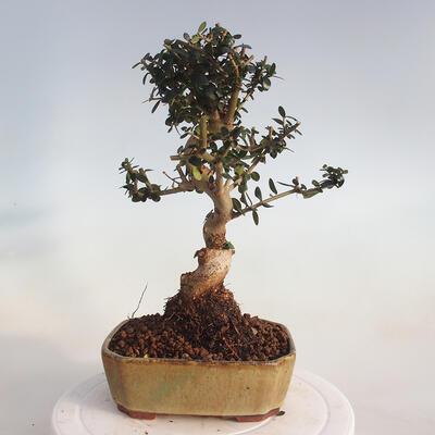 Bonsai-Schale 42 x 33 x 8 cm, graublaue Farbe - 3